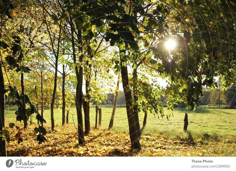 Oktobertag Natur Landschaft Pflanze Tier Sonne Sonnenaufgang Sonnenuntergang Sonnenlicht Herbst Wetter Schönes Wetter Baum Gras Sträucher Park Wiese Feld Wald