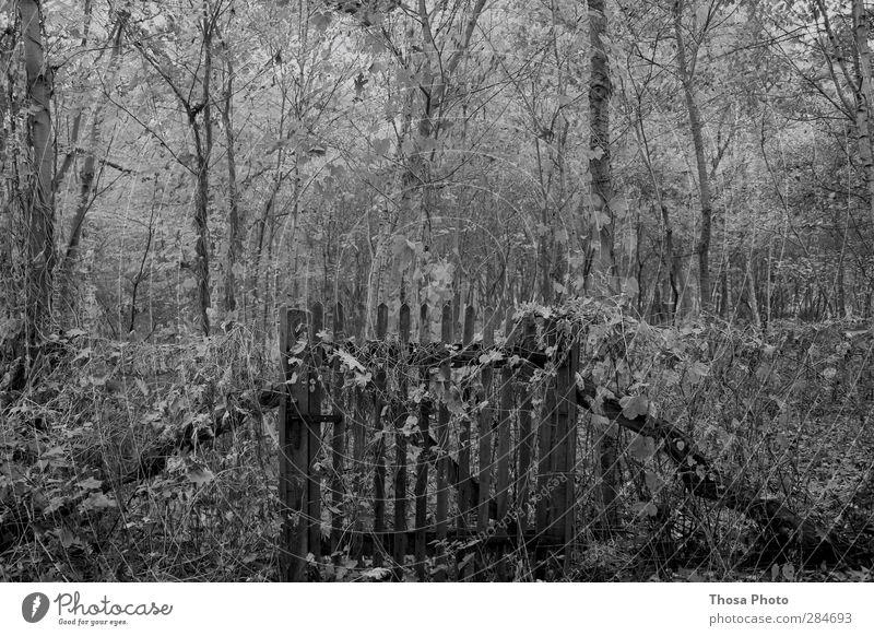 Alter Garten Natur alt Winter Wald Umwelt Herbst Holz geschlossen Zaun Schloss eckig Überleben