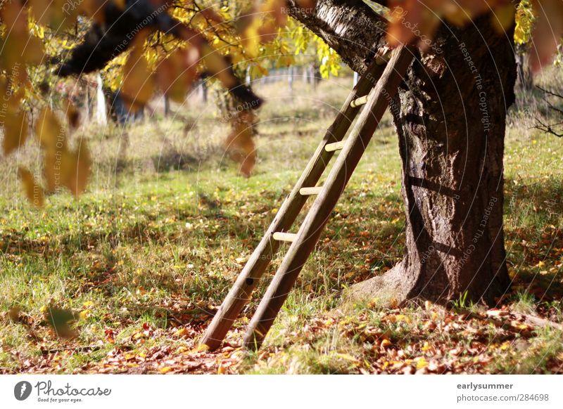 goldener Oktober Natur alt grün Baum Erholung Blatt gelb Wärme Wiese Herbst Gras Garten braun orange Feld Idylle