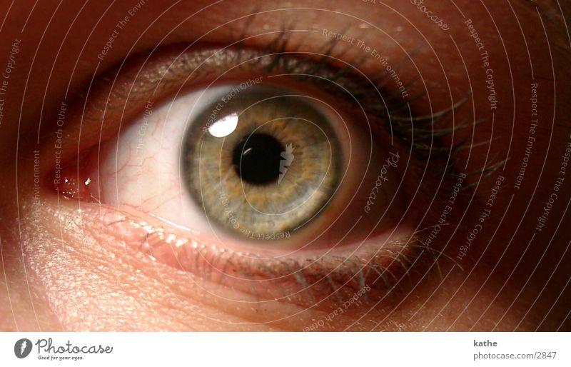 auge 02 Mensch Auge Perspektive Pupille Regenbogenhaut
