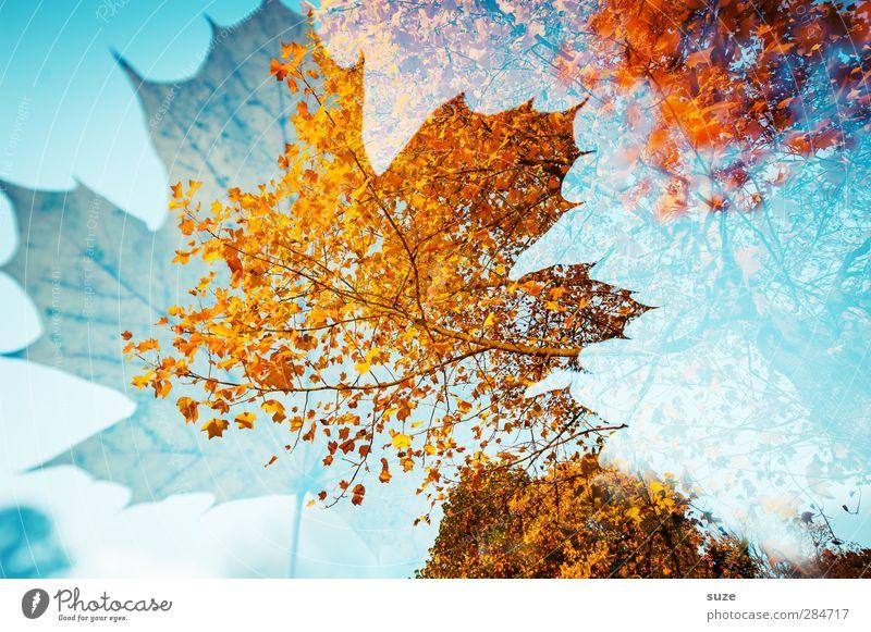 Herbstlied Natur blau Pflanze Baum rot Blatt gelb Umwelt Herbst Wetter außergewöhnlich ästhetisch Schönes Wetter Vergänglichkeit Kreativität Jahreszeiten