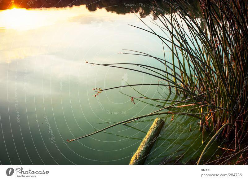 Tagesspiegel harmonisch ruhig Meditation Umwelt Natur Landschaft Urelemente Wasser Horizont Sommer Schönes Wetter Gras Wiese Seeufer authentisch dunkel
