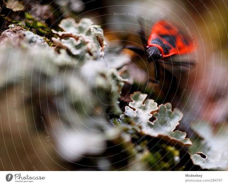 Gekrabbelt wird natürlich 1 Umwelt Natur Pflanze Herbst Moos Park Tier Wildtier Käfer authentisch braun mehrfarbig grau grün orange rosa rot schwarz weiß