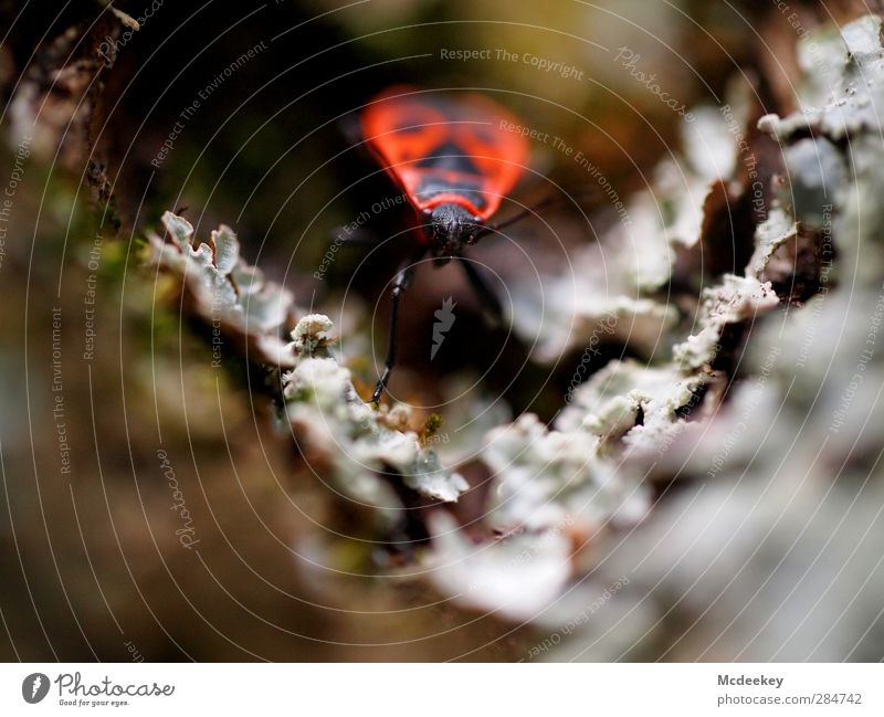 Gekrabbelt wird natürlich 2 Umwelt Natur Pflanze Herbst Baum Moos Park Tier Wildtier Käfer 1 authentisch braun mehrfarbig gelb grau grün orange rosa rot schwarz