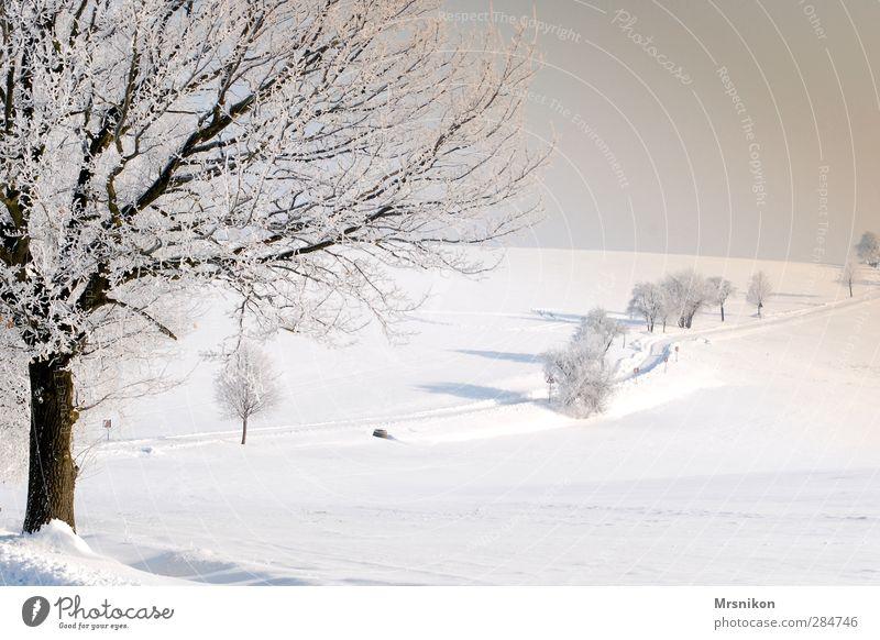 Winterzauber Freizeit & Hobby wandern Natur Landschaft Sonnenaufgang Sonnenuntergang Schönes Wetter Eis Frost Schnee Baum Feld Dorf Stadtrand Menschenleer