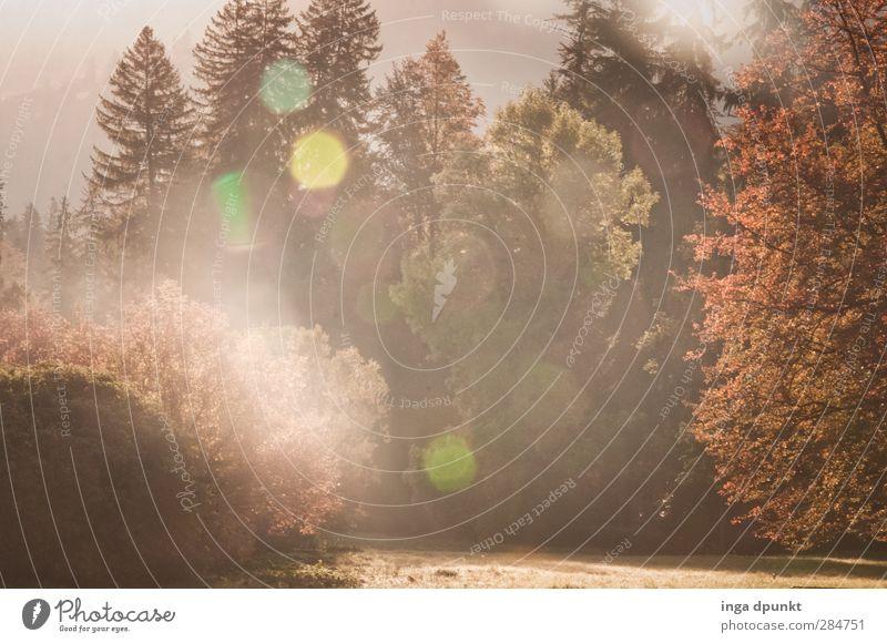 Leuchtender Einfall Umwelt Natur Landschaft Pflanze Herbst Schönes Wetter Baum Wiese Wald Siebenbürgen Rumänien Abenteuer Energie Idylle Umweltschutz Licht