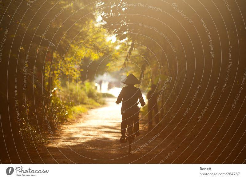 Frau mit Rad Mensch Natur Ferien & Urlaub & Reisen grün Pflanze Baum Wald Erwachsene Ferne Straße feminin Wege & Pfade natürlich Fahrrad Tourismus