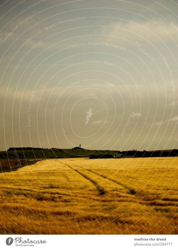 GETREIDE Umwelt Natur Landschaft Himmel Wolken Horizont Sommer Schönes Wetter Pflanze Nutzpflanze Feld Küste schön Getreidefeld Ferne Traktorspur Wind goldgelb
