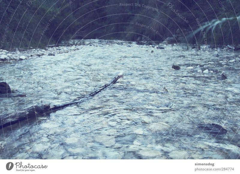jungle Natur Wasser dunkel kalt Bewegung Wege & Pfade Stein Wellen frisch nass nachdenklich Wassertropfen Abenteuer Idylle Urelemente Fluss
