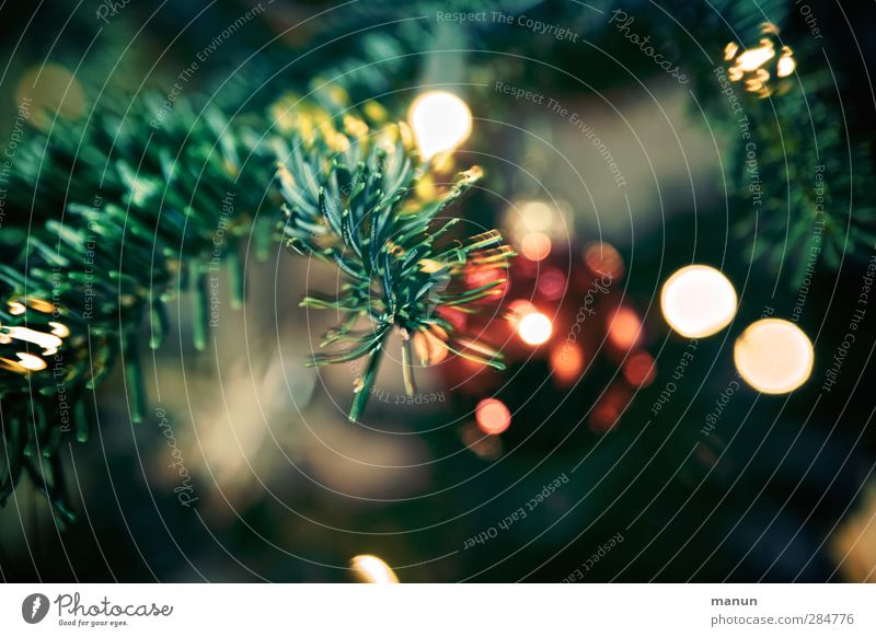 Blinker Feste & Feiern Weihnachten & Advent Weihnachtsbaum Weihnachtsdekoration Weihnachtsbeleuchtung Christbaumkugel glänzend leuchten Farbfoto Innenaufnahme