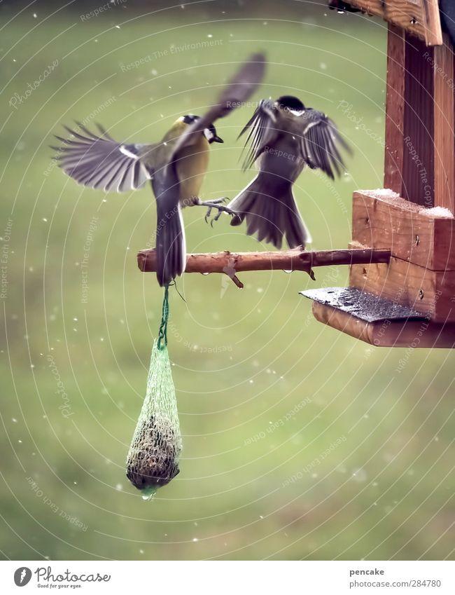 knödlhändl Tier Winter fliegen Vogel Schneefall Wetter Wildtier Zukunftsangst Wut Mut Konflikt & Streit Aggression Willensstärke Schneeflocke Tierliebe Futterhäuschen