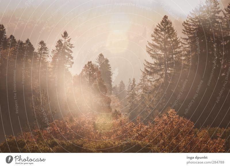 Waldlichtung Umwelt Natur Landschaft Pflanze Herbst Schönes Wetter Baum rumänien Siebenbürgen Abenteuer Tourismus Licht Außenaufnahme Menschenleer Tag Schatten