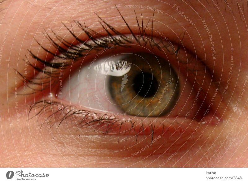 auge 04 Mensch Gesicht Auge Perspektive Wimpern Pupille Regenbogenhaut