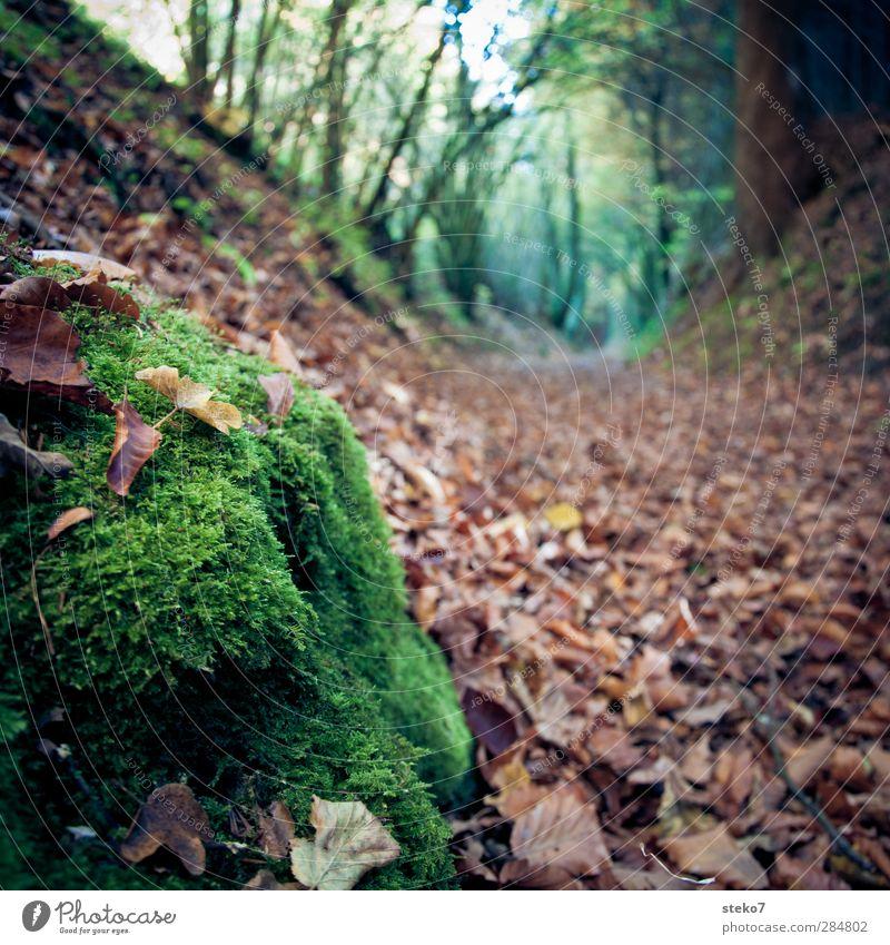 wegmarkierung Natur Herbst Blatt Wald braun grün Vergänglichkeit Wandel & Veränderung Wege & Pfade Fußweg Moos Farbfoto Außenaufnahme Nahaufnahme Menschenleer