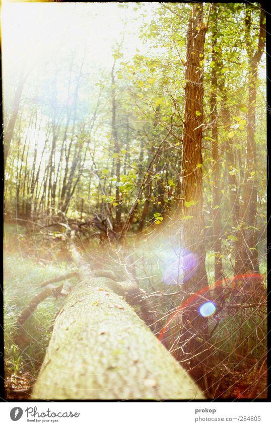Herbstlicht Natur Pflanze Baum Sonne Blatt Landschaft Erholung Wald Umwelt Gras Wege & Pfade hell natürlich wild leuchten