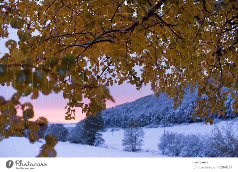 Wintereinbruch Umwelt Natur Landschaft Sonnenaufgang Sonnenuntergang Herbst Wetter Eis Frost Schnee Baum Blatt ästhetisch einzigartig erleben Freiheit Idylle