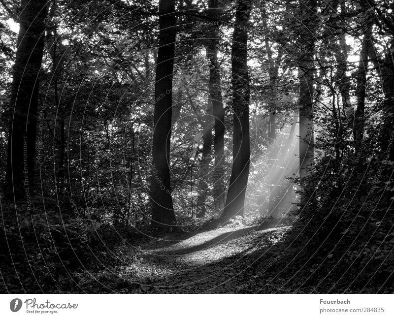 Wen hat Scotty eben weggebeamt? Jagd Ausflug wandern Joggen Landwirtschaft Forstwirtschaft Landschaft Pflanze Herbst Schönes Wetter Baum Sträucher Park Wald
