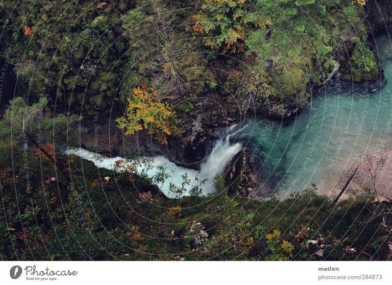 für Wilma blau grün Pflanze Baum Landschaft Berge u. Gebirge Herbst Gras Felsen braun Fluss Flussufer Moos Bach Schlucht Wasserfall