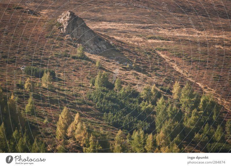 Waldgrenze Umwelt Natur Landschaft Pflanze Herbst Schönes Wetter Felsen Berge u. Gebirge Karpaten Siebenbürgen Rumänien Abenteuer Umweltschutz Hochgebirge