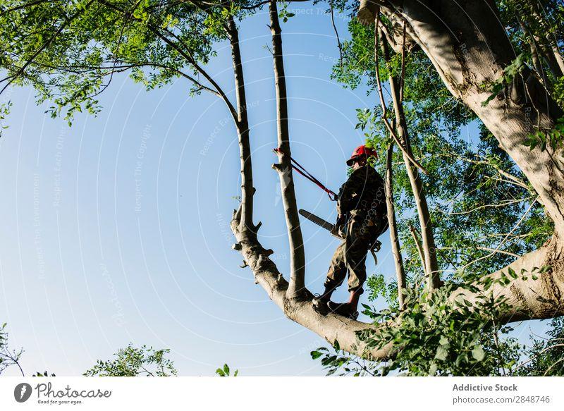 Mann schneidet Bäume im Wald Trimmer Baum professionell Beruf Flugzeugwartung Werkzeug Entfernung Heimwerker Uniform Stutzen Handwerker Gerät Trimmen