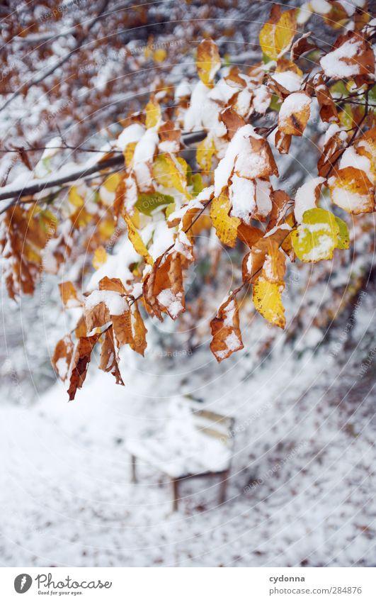 Herbst-Winter Natur schön Baum Farbe Einsamkeit Blatt ruhig Umwelt kalt Leben Schnee Wege & Pfade Zeit träumen