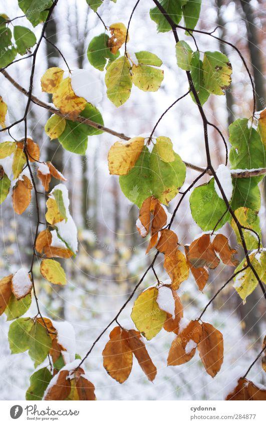 Die letzten Blätter Natur schön Baum Blatt ruhig Winter Wald Umwelt kalt Herbst Leben Schnee Zeit träumen Eis Wetter