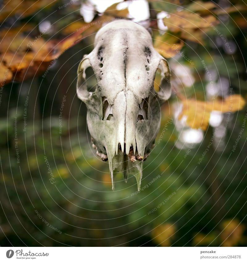 Samhuinn Skulptur Kultur Jugendkultur Urelemente Herbst Wald Wildtier Totes Tier Zeichen Identität Rätsel Vergänglichkeit Wandel & Veränderung Halloween Kelten