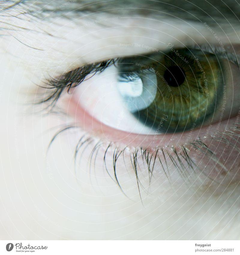 Deep Mensch grün Auge träumen maskulin Wimpern