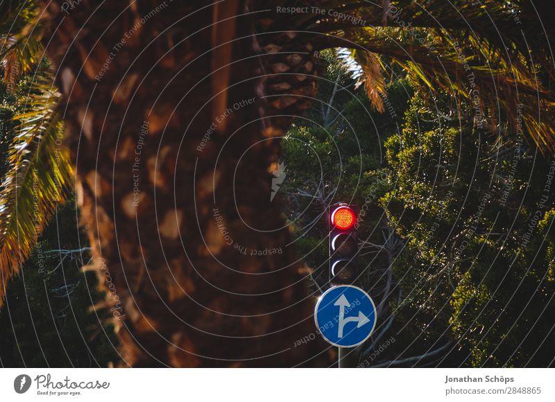 rote Ampel für Geradeaus und Rechts Verkehr Schilder & Markierungen Erfolg warten Geschwindigkeit Richtung stoppen Pfeil Mut Verkehrswege Palme Politik & Staat