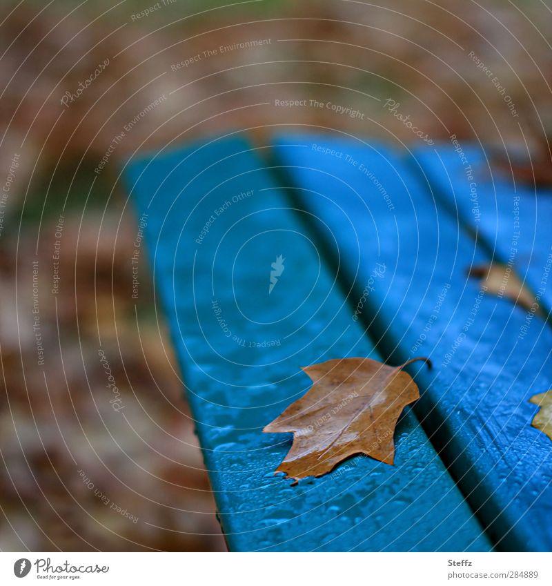 Novemberblue Natur blau Farbe Blatt ruhig Herbst braun Park Regen nass Vergänglichkeit Romantik Wandel & Veränderung Vergangenheit Bank Ende