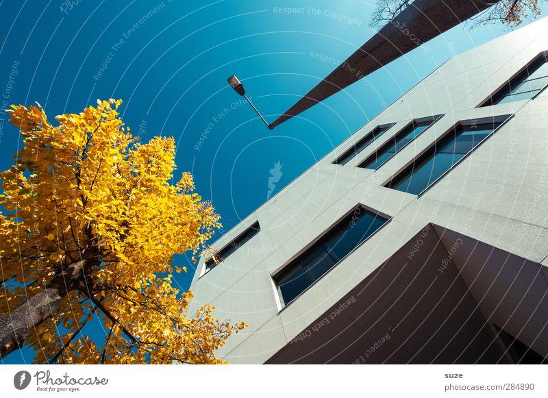 Stadtkontraste Arbeit & Erwerbstätigkeit Business Umwelt Himmel Wolkenloser Himmel Herbst Schönes Wetter Baum Haus Bauwerk Gebäude Architektur Fassade Fenster