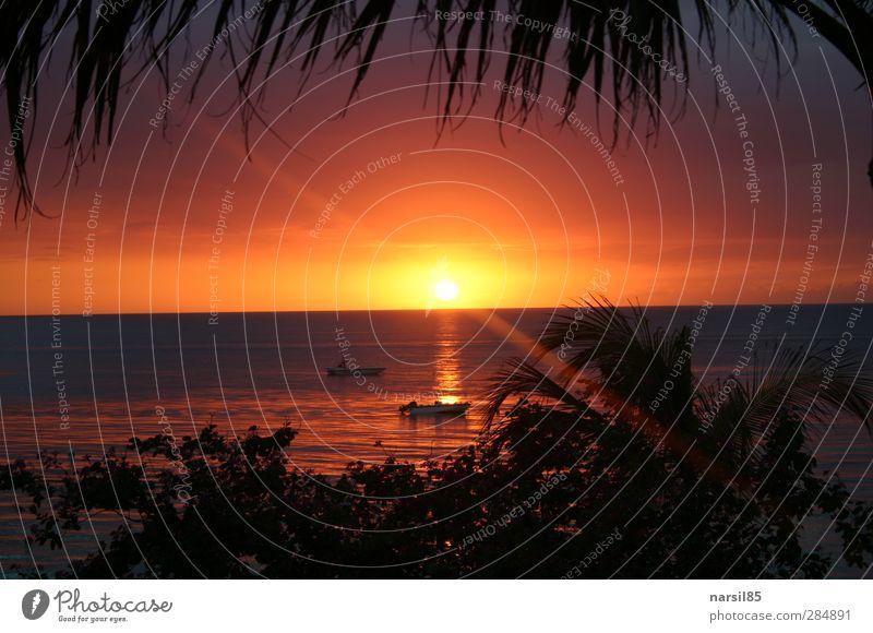 Sonnenuntergang a la Jamaica Himmel Natur blau Ferien & Urlaub & Reisen Wasser Sommer Pflanze Baum rot Meer Landschaft Erholung gelb Umwelt Küste