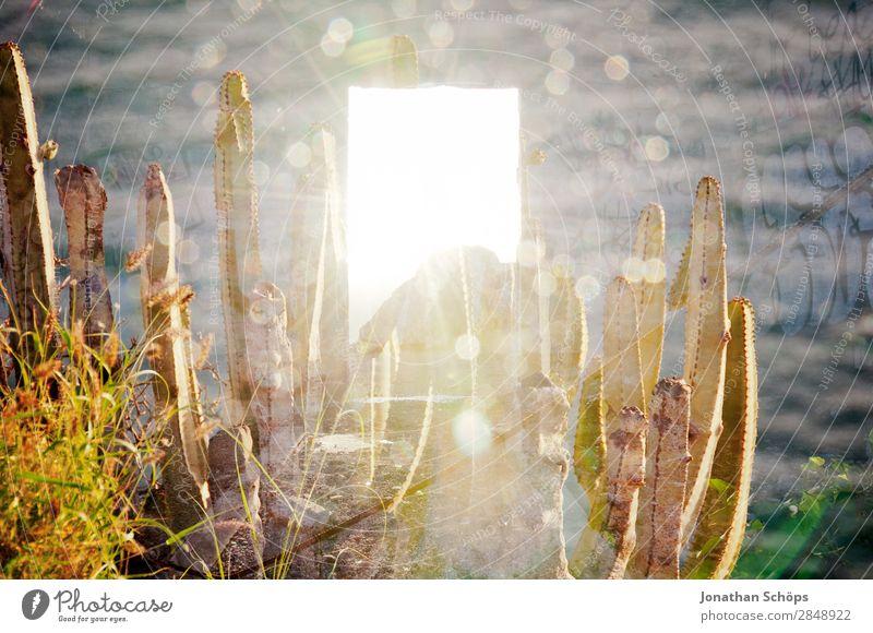 leuchtende Tür Mehrfachbelichtung Natur Meer Wärme Religion & Glaube außergewöhnlich Tod Lebensfreude authentisch Hoffnung Ostern Wüste Mut Doppelbelichtung