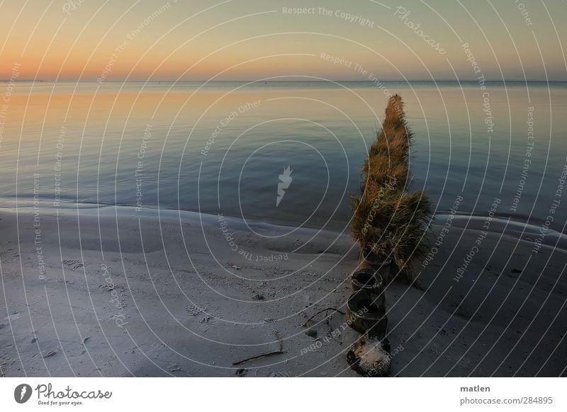 Toupet Landschaft Pflanze Himmel Wolkenloser Himmel Horizont Sonne Herbst Wetter Schönes Wetter Gras Küste Strand Meer blau gold grau ruhig Windstille