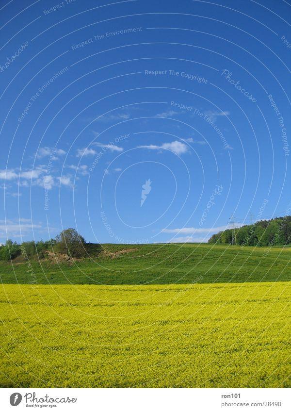 My Office View Raps Rapsfeld Baum gelb grün Wolken Hügel Wiese Himmel blau