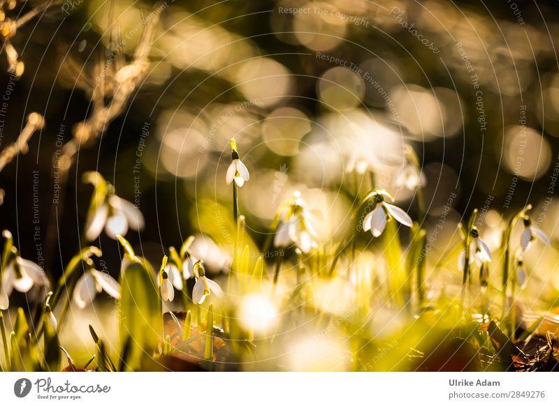 Frühling Natur Pflanze schön Blume Blüte natürlich Traurigkeit Feste & Feiern Gras Garten Stimmung Dekoration & Verzierung leuchten träumen glänzend