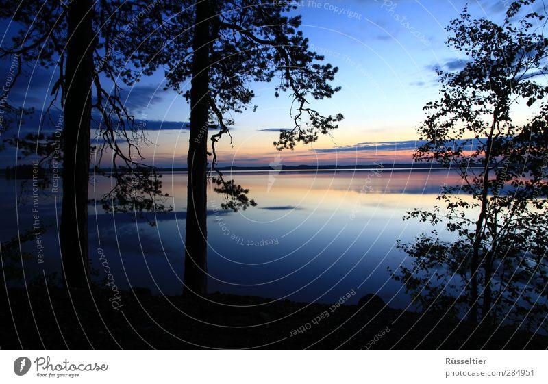 Paradise Ferien & Urlaub & Reisen Ferne Freiheit Sommer Seeufer blau gelb orange schwarz Fernweh Baum Silhouette Wasser Horizont Farbfoto mehrfarbig Abend