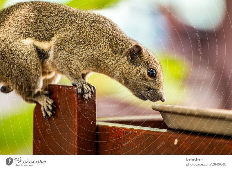 was gibts zum frühstück? Ferien & Urlaub & Reisen schön Tier Ferne Auge lustig klein Tourismus außergewöhnlich Ausflug Wildtier Tisch Abenteuer fantastisch