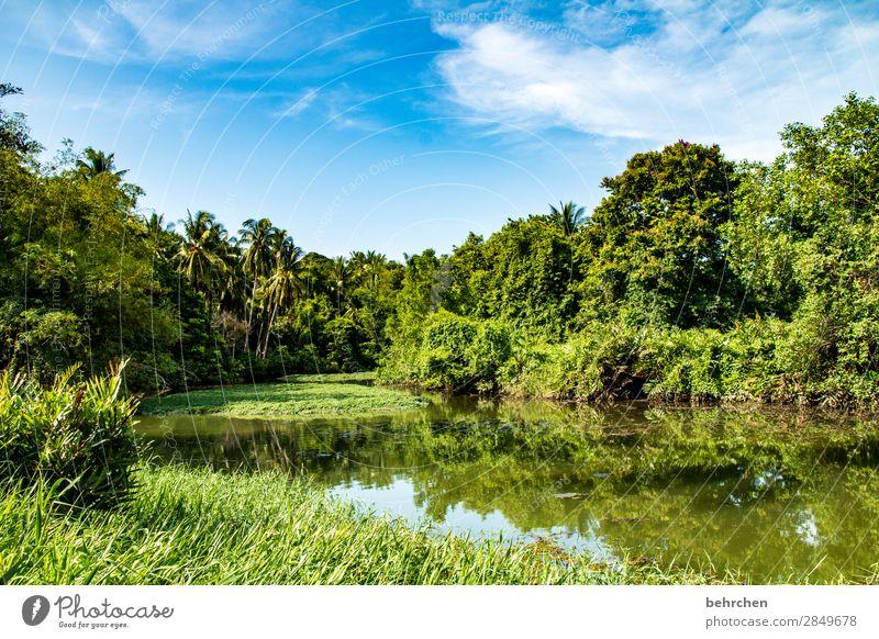 grüner Idylle Paradies fantastisch Asien Pflanze Menschenleer genießen erholen außergewöhnlich Sonnenlicht exotisch traumhaft Palmen Flussufer Spiegelung