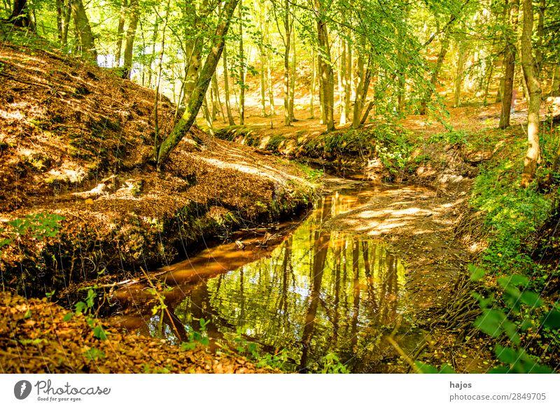 Wald an der Ostseeküste in Polen mit dem Flüsschen Orzechowa Erholung Natur Landschaft Baum Bach frisch grün Fluss wild natürlich Orchzechowo mystisch hell