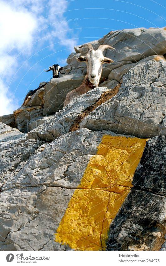 guck mal wer da guckt Natur Landschaft Himmel Wolken Hügel Berge u. Gebirge Gipfel Tier Nutztier Ziegen 2 sitzen wandern blau gelb grau schwarz weiß Kreta