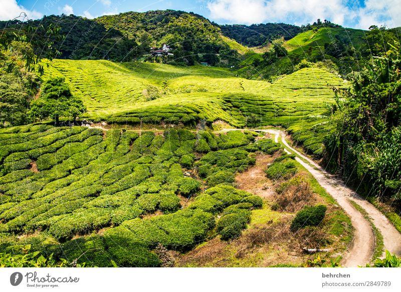 alle wege führn...zum tee;) Ferien & Urlaub & Reisen Natur Pflanze grün Landschaft Baum Blatt Ferne Berge u. Gebirge Straße Wege & Pfade Tourismus