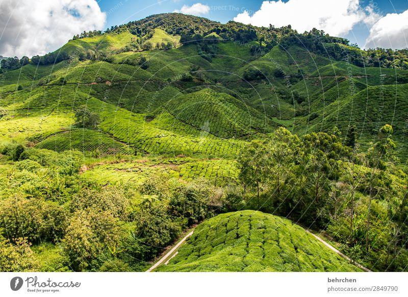 eistee für alle! Himmel Ferien & Urlaub & Reisen Natur Pflanze blau grün Landschaft Baum Wolken Blatt Ferne Berge u. Gebirge Tourismus außergewöhnlich Freiheit