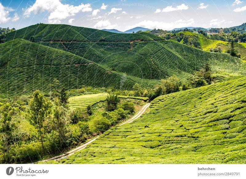 wie wärs mit tee? Himmel Ferien & Urlaub & Reisen Natur Pflanze grün Landschaft Baum Wolken Blatt Ferne Berge u. Gebirge Umwelt Tourismus außergewöhnlich
