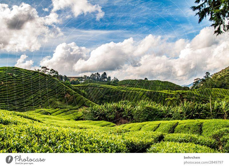 draußen nur kännchen Ferien & Urlaub & Reisen Tourismus Ausflug Abenteuer Ferne Freiheit Natur Landschaft Himmel Wolken Pflanze Baum Sträucher Blatt Nutzpflanze