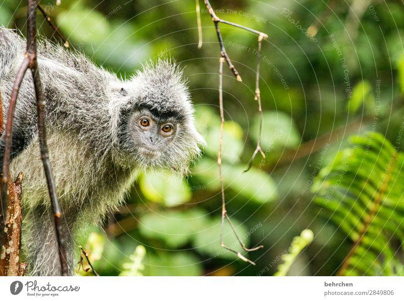 verträumt Ferien & Urlaub & Reisen Tier Ferne Auge Tourismus außergewöhnlich Freiheit Ausflug Wildtier Abenteuer fantastisch niedlich beobachten Neugier Asien