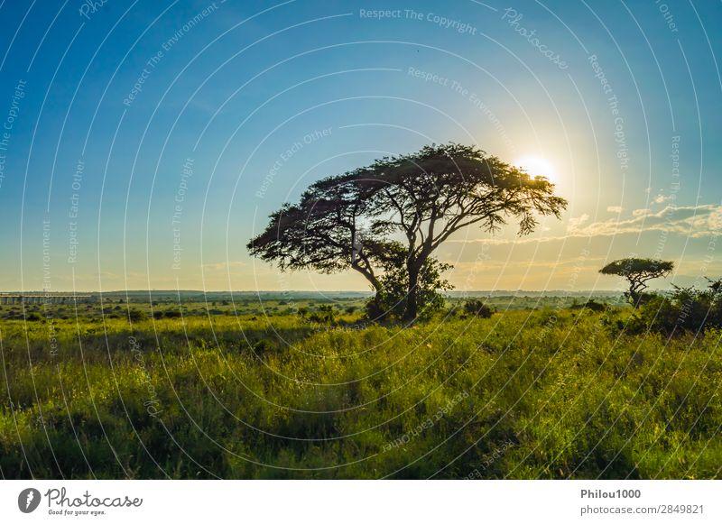 Blick auf den Sonnenuntergang in der Savanne Ferien & Urlaub & Reisen Safari Berge u. Gebirge Natur Landschaft Baum Gras Park groß wild Nairobi Afrika