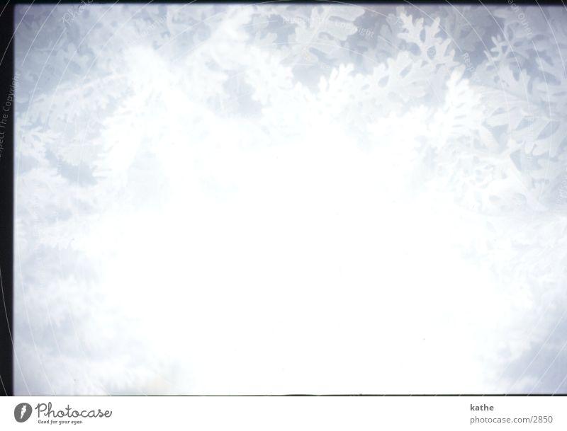 eisblumen weiß Blume Pflanze kalt Eis weich Bildbearbeitung Weichzeichner