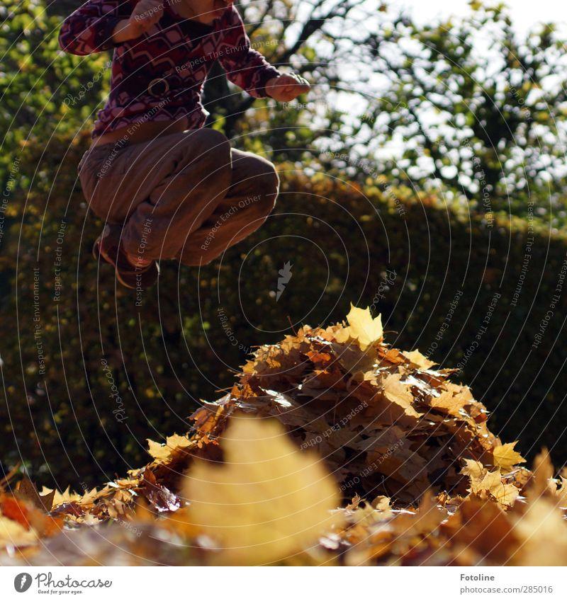 absoluter HERBSTspaß!!! Mensch feminin Kind Mädchen Kindheit Körper Mund Arme Hand Beine Umwelt Natur Pflanze Herbst Schönes Wetter Baum Blatt frech frei