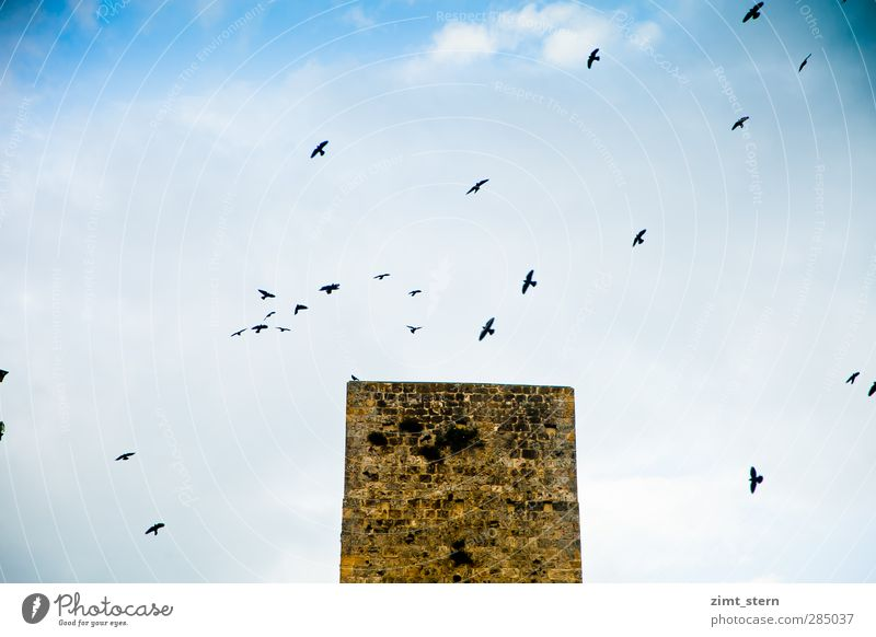 Vogel(s)turm Himmel Ferien & Urlaub & Reisen blau weiß schwarz Architektur fliegen braun Vogel oben Horizont Tourismus hoch Turm historisch Burg oder Schloss
